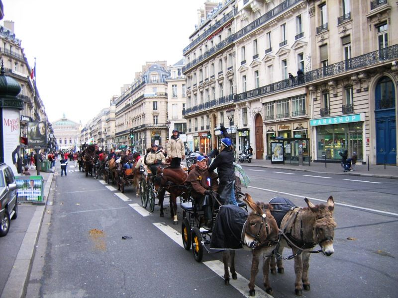 Fullmoon photo salon du cheval salon du cheval for Salon du cheval paris adresse